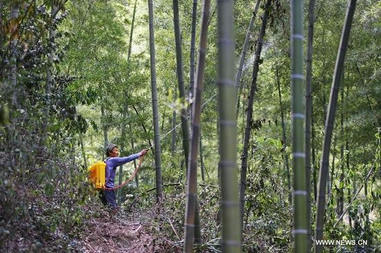 A working staff sprays pesticides to kill locusts in a bamboo forest in Wutan Township of Yiyang City, central China's Hunan Province, Aug. 8, 2013. A plague of locusts is spreading in bamboo forests in parts of the province, due to the continuous heat and drought recently. (Xinhua/Li Ga)