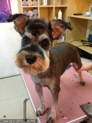 Pets In Ne China Are Well Groomed Lifestyle News Sina English