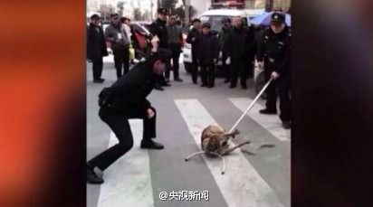 Police beat homeless man's dog to death