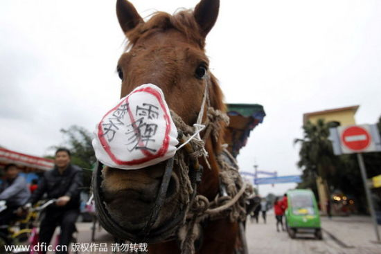 A horse wears a mask with a message reading