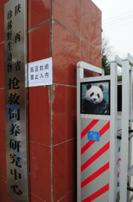 Shaanxi Wildlife Center on January 4, 2015
