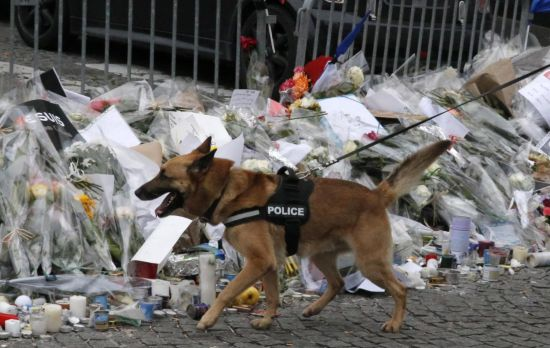 A police sniffer dog walk past flowers at the site of killing of the kosher market where four hostages were killed, and shortly before Israeli Prime Minister Benjamin Netanyahu's visit to the site, in Paris, France, Monday, Jan. 12, 2015. France's defense minister says the country is mobilizing 10,000 security forces to protect the country after three days of terror attacks. French Interior Minister Bernard Cazeneuve said 4,700 security forces would be assigned to protect France's 717 Jewish schools. (AP Photo/Francois Mori)