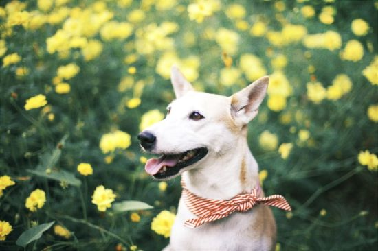 Dog Who Loves Smiling Beats Cancer Lifestyle News SINA English - Meet gluta the smiling dog that beat cancer