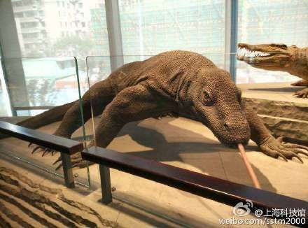A toe was snapped off a model of a komodo dragon in the Shanghai Natural History Museum.