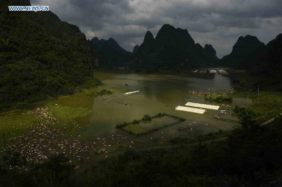 16,000 pigs drowned as rainstoms sweeping SW China - China