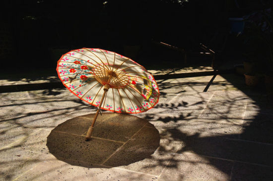 The elder Zheng prefers to draw local plants such as camellias, ginkgos and azaleas on the umbrella. [Photo by Xu Jing / chinadaily.com.cn]