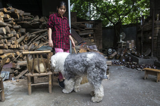 It takes patience and tolerance of loneliness to work with a kiln. Luckily, I am not alone. My girlfriend and I had known each other since high school. She's not an art student and she knows not much about pottery. However, when I decided to establish my career in Jingdezhen, she came with no hesitation. Now even our dog loves the kiln. We have to force him back each time, because the inside of the kiln is too dusty.