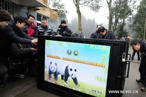 Panda pair to leave for exhibition in Japan