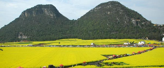 Magnificent rape flower fields in SW China