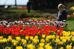 Tulip Festival kicks off in Swizerland