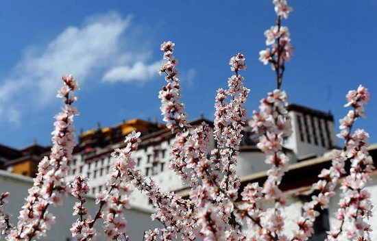 Spring comes to Potala Palace in Lhasa
