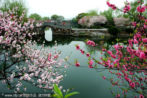 New blossoms reflect ancient beauty