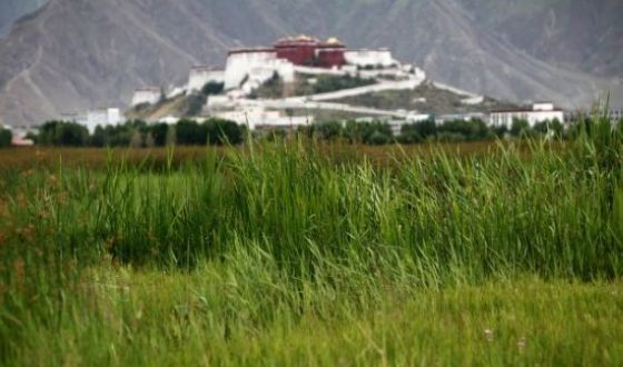 Lhalu wetland in Lhasa