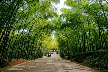 South Sichuan bamboo sea