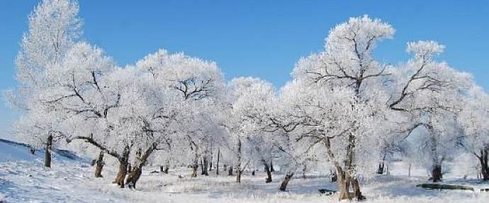 Beautiful rimed trees in Yichun