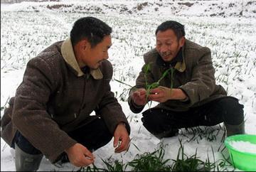 Severe drought hits N China (2009.2)