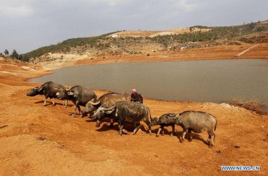 Lingering drought hits SW China's Yunnan