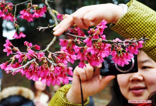 Cherry blossoms attract visitors in SW China