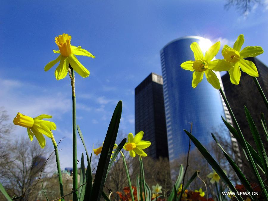 Northern hemisphere embraces flourishing spring flowers